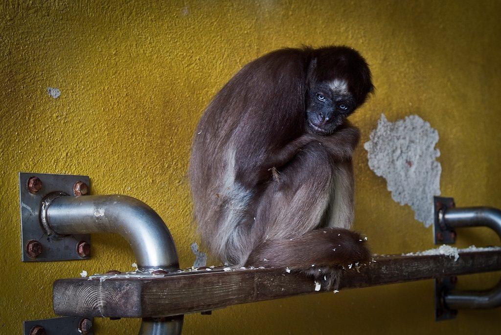 Barcelona Zoo - Animal Equality Investigation