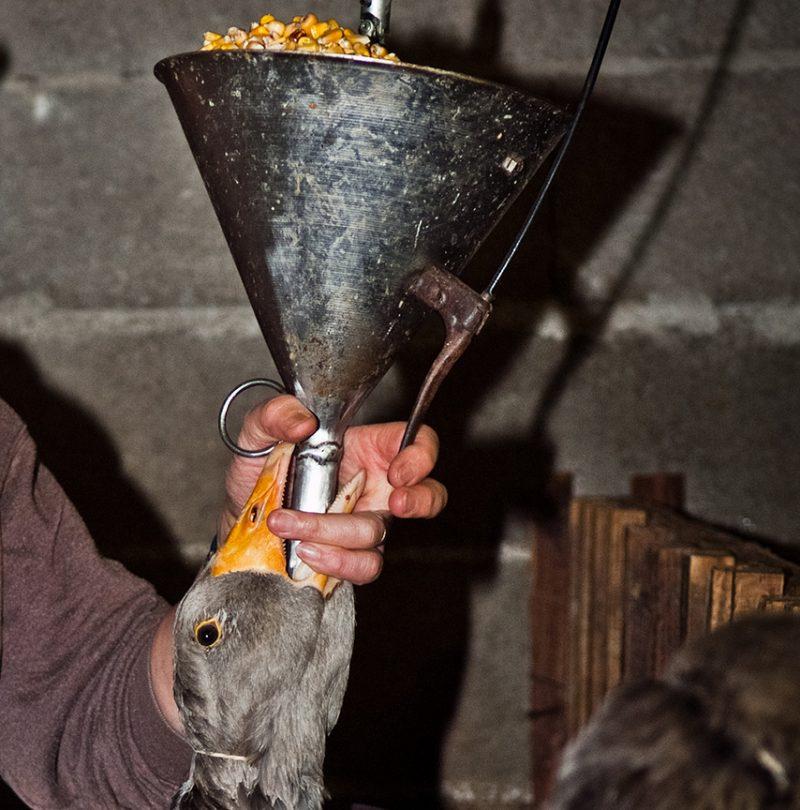Foie Gras UK Import Ban - Animal Equality