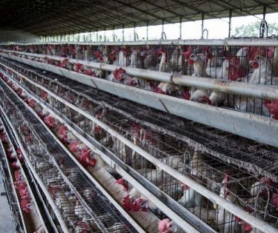 investigation_hens_factory_farm_2017_400x400